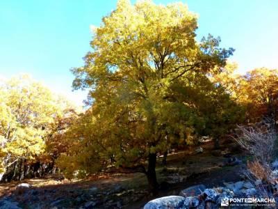 Castañar de El Tiemblo;Ávila; parques naturales de murcia rutas senderismo por madrid turismo acti